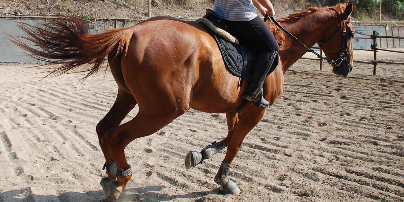 7-roma-river-ranch-scuola-di-equitazione-roma